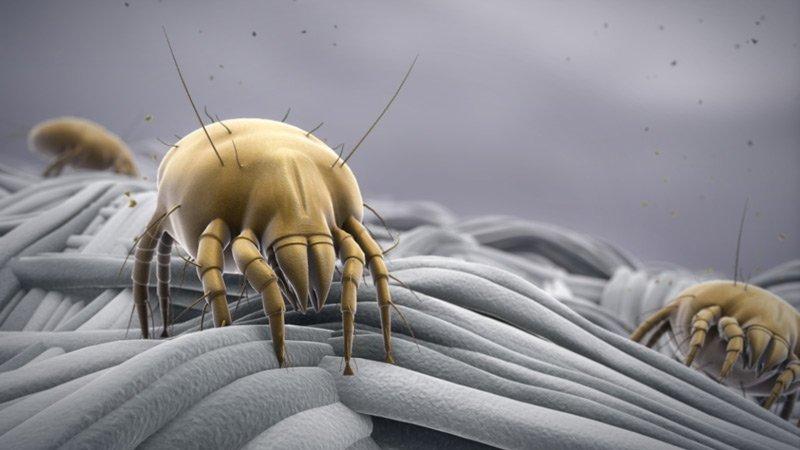Solución eficaz para eliminar los ácaros del colchon